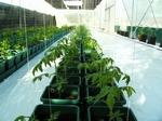 Easy 2 Grow 48 System