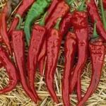 PEPER 'Cayenne Red' / 'Lombok Red' / 'Cayenne Long Slim', 25
