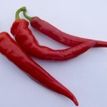 PEPER 'Cayenne Large Red Thick' 15 zaden